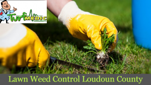 Lawn Weed Control Loudoun County