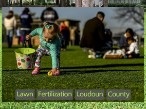 Lawn Fertilization Loudoun County
